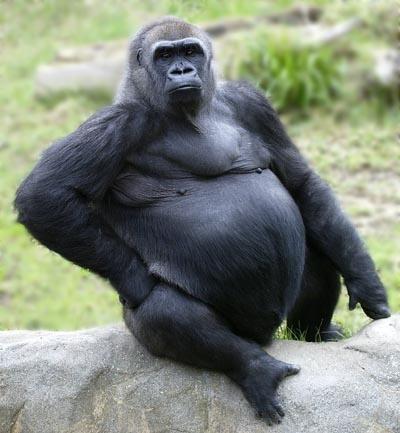 66cd4790-gorilla-cloned-2-blur-lpg.jpg